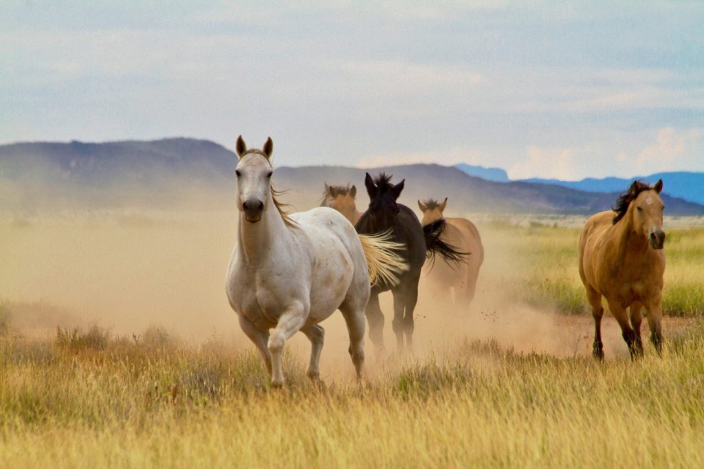 Horses Running in West Texas